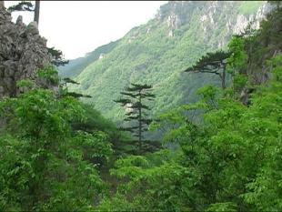 Panorama  Valea Cernei